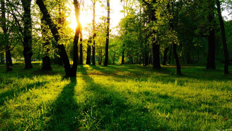 bosco_e_prato_verde_con_raggi